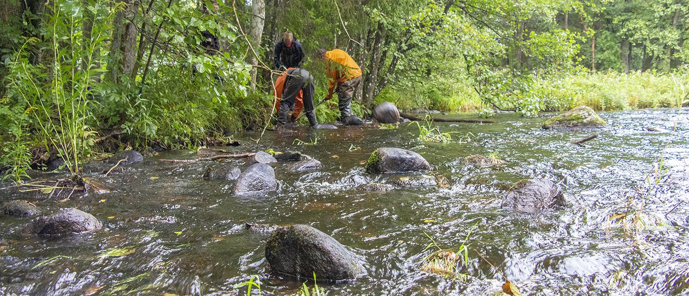 Biotopvård i Sörån vid Olsfors